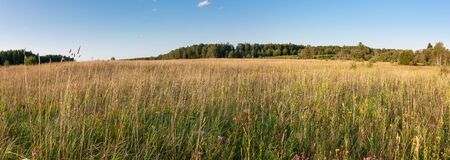 Summer natural agricultural field landscape - beautiful meadow with grass and trees on horizon under clear summer blue sky under bright summer sunlight panoramic landscape.