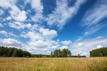 Summer natural agricultural field landscape - beautiful meadow with grass and wildflowers and trees on horizon under clear summer blue sky under bright summer sunlight landscape.