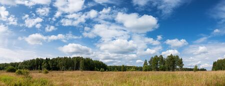 Summer natural agricultural field landscape - beautiful meadow with grass and wildflowers and trees on horizon under clear summer blue sky under bright summer sunlight panoramic landscape.