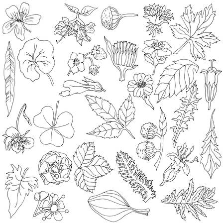 Herbal elements with hand drawn flowers and plants. Black and white vector illustration in sketch style. Will be use on postcard, poster, banner.