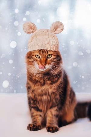Cat in mouse hat in winter Archivio Fotografico
