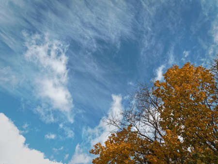 A richly blue sky and beautiful cirrus clouds swim along the autumn sky on a city park. Stock Photo