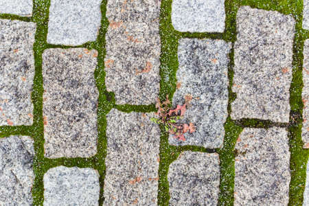 Grass growing through concrete slabs of the road for pedestrian traffic. close-up Stock Photo