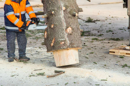 a city service worker saws a tree with a gasoline powered saw.