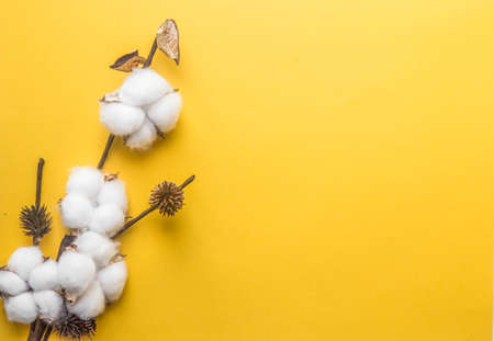 branch of white cotton on a yellow background, minimalism