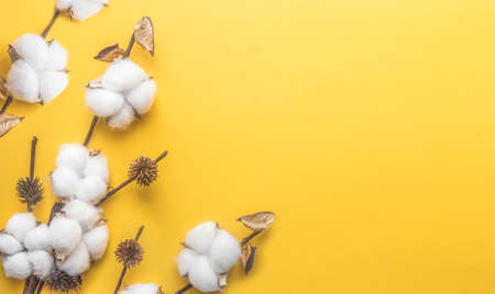 branch of white cotton on a yellow background, minimalism, cover web