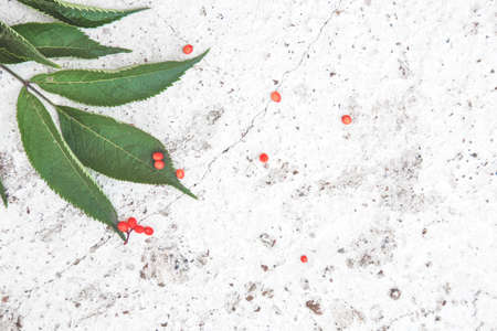 Creative arrangement made of rowan on white concrete texture. Stock fotó