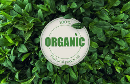 Eco friendly and organic product stamp. Stockfoto