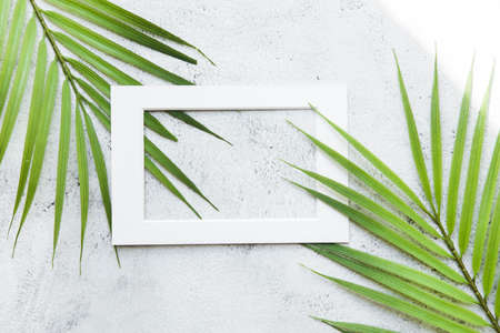 Green palm leaf nature with white frame text box for presentation background or texture - natural or environment concept
