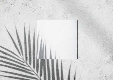 shadow of tropical palm leaves with white card, text box. Flat lay, nature concept, mockup.