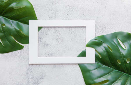 Green monstera palm leaf nature with white frame text box for presentation background or texture - natural or environment concept Reklamní fotografie