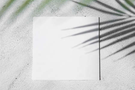 shadow of tropical palm leaves with white card, text box. Flat lay, nature concept, mockup