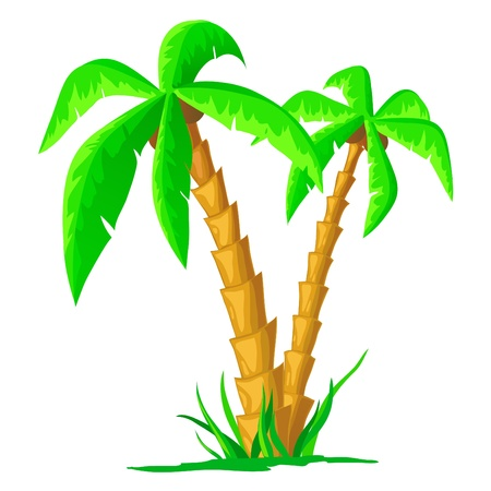 illustration. Green cartoon tropical palm isolated on white background Stock Vector - 8893328