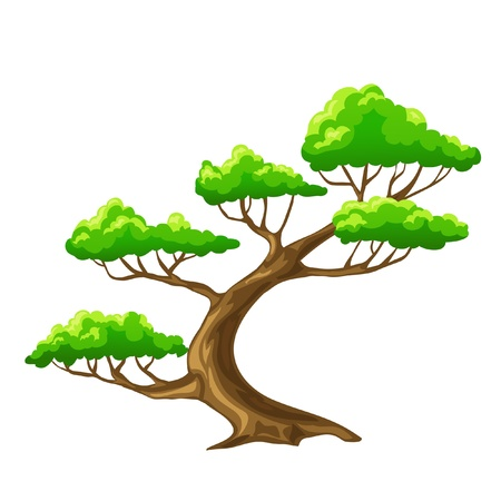 trees with roots: illustration. Cartoon tree bonsai with white background
