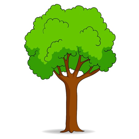 deciduous: Vector illustration. Cartoon tree isolated on white background Illustration
