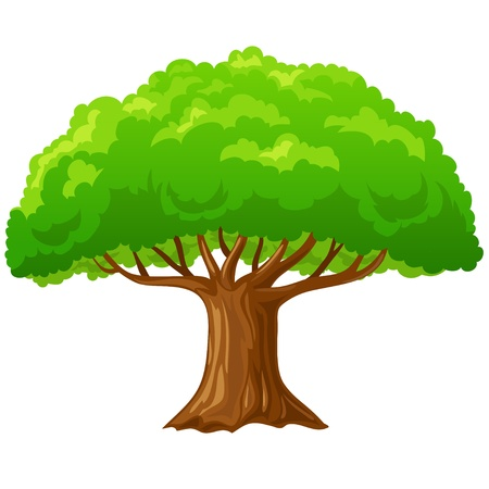 branches: Cartoon big green tree isolated on white background. Vector illustration.