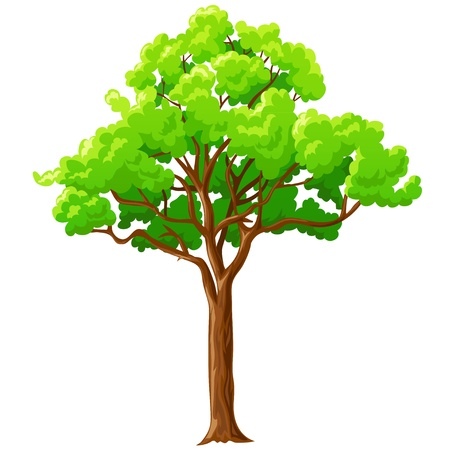 Cartoon big green tree with branches isolated on white background. Vector illustration. Vettoriali
