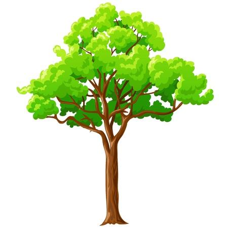 Cartoon grande albero con rami verdi isolato su sfondo bianco. Illustrazione vettoriale.