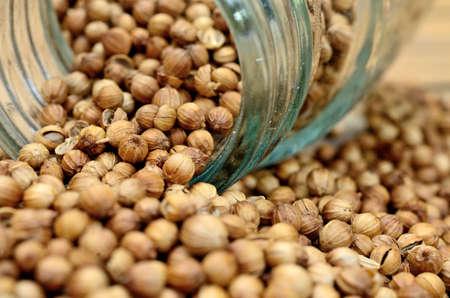 culantro: coriander seed on wooden table Foto de archivo