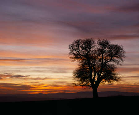 anywhere: A tree on sunset anywhere in Bulgaria, Balkans Stock Photo