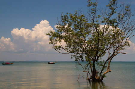 tranfer: single tree in the flood on Rey Ley