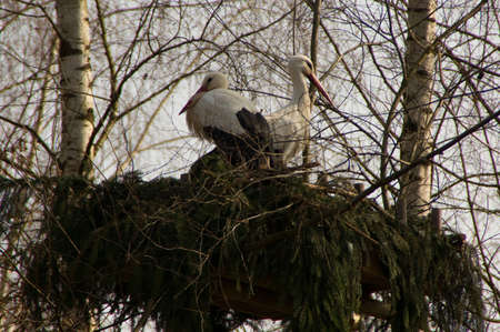 fount: Stork nest stork born birth symbol tower breed