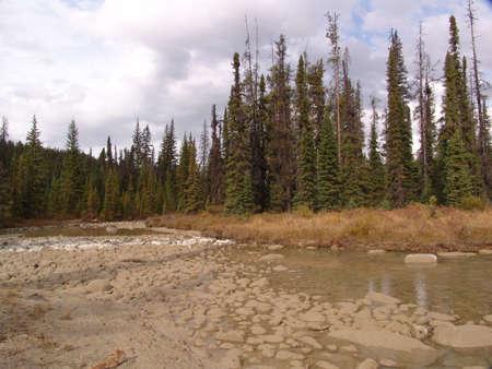 jasper: forest in Jasper National Park