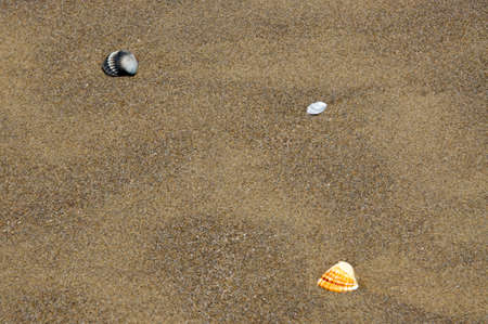 distributed: Shells little lonely distributed Arranged beach Stock Photo