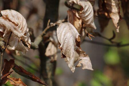 dode bladeren: Dead leaves