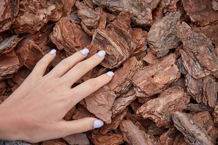 Background made of wood chips, closeup shot, wooden texture
