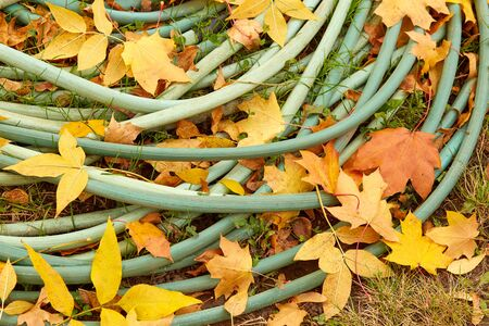 hose lying on the grassy ground,powdered with leaves, A close up image of a garden hose Stok Fotoğraf