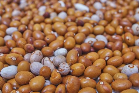 Background of many grains of dried beans. Brown beans texture. Food background.