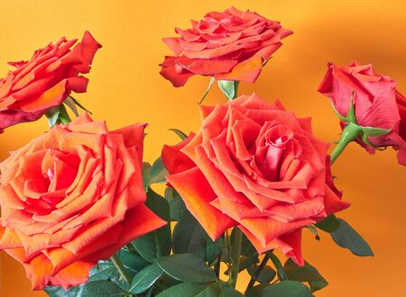 Bouquet with roses on an orange background.