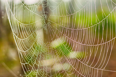 Beautiful web with dew drops in the sunlight in the morning. Selective focus