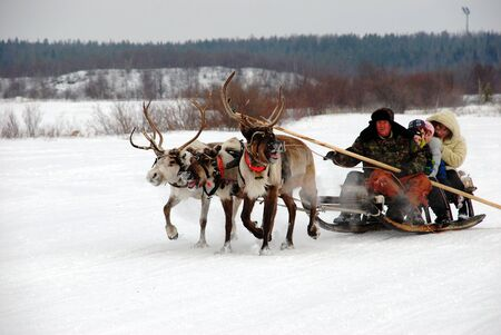 herder: REVDA, RUSSIA - MARCH, 2012: North Holiday - reindeer herder rolls tourists on a reindeer sleigh