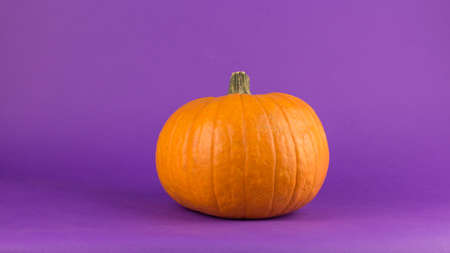 Fresh organic pumpkin on a purple background. Halloween pumpkin on a purple background. Banco de Imagens