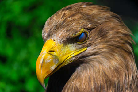 Seen before a eagle blink. Stock Photo
