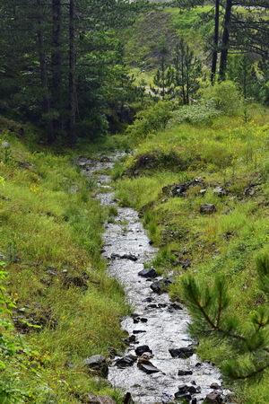 Water stream in the forest Archivio Fotografico