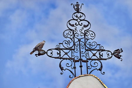 Bird sitting on the metal cross on the top of the church