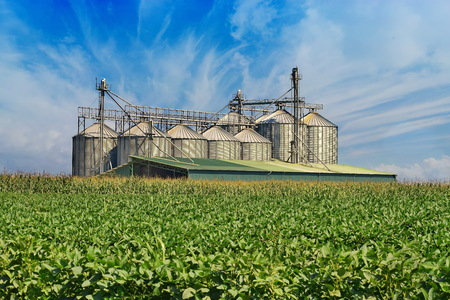 Grain tanks in the corn field captured at the sunset Archivio Fotografico