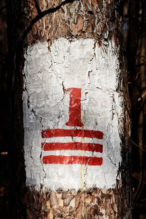Mark of the trail on the tree deep in the forest