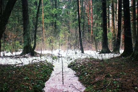 sweden winter: The frozen stream Stock Photo
