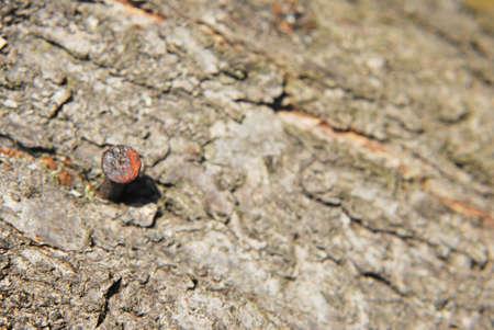 rusty nail: Clavo oxidado en el fondo de madera