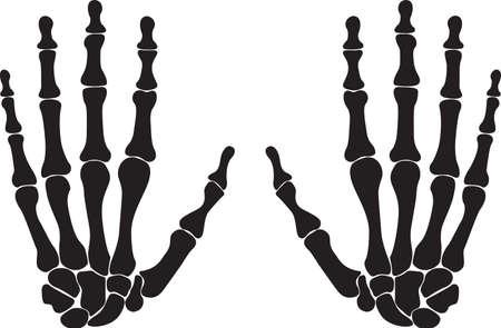 finger bones: Bones of both hands illustrated on white background Illustration