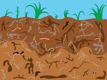 earthworms: Illustration of earthworms underground background Illustration