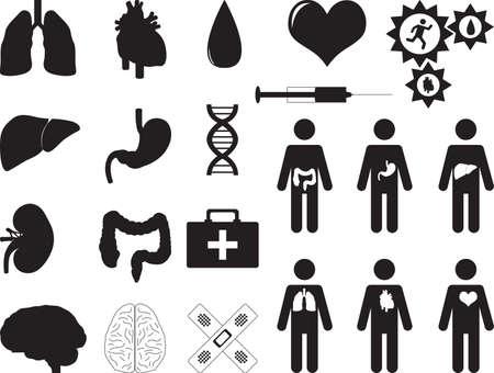 Menselijke organen en medische hulpmiddelen geïllustreerd op wit Stockfoto - 32623952
