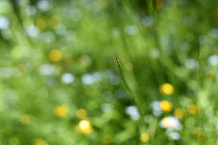 Green grass abstract blur background