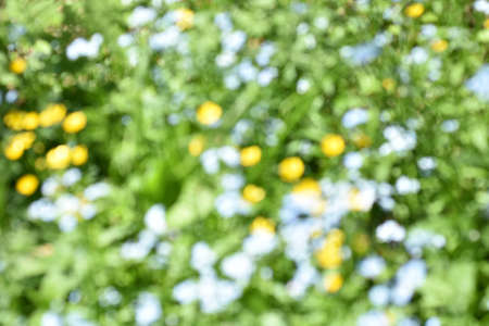 Abstract flowers in green grass blur background
