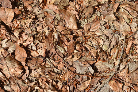 Dry leafs on forrest road background