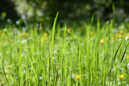 Simple abstract green grass background